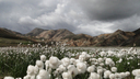 128x72-cotton_field.jpg